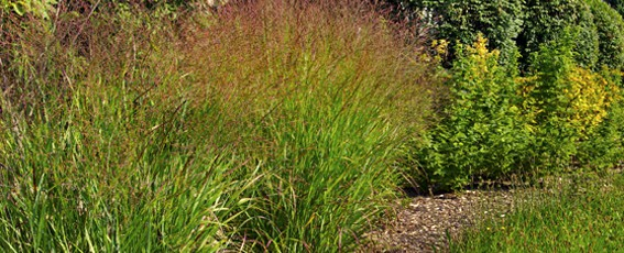 grasses feature