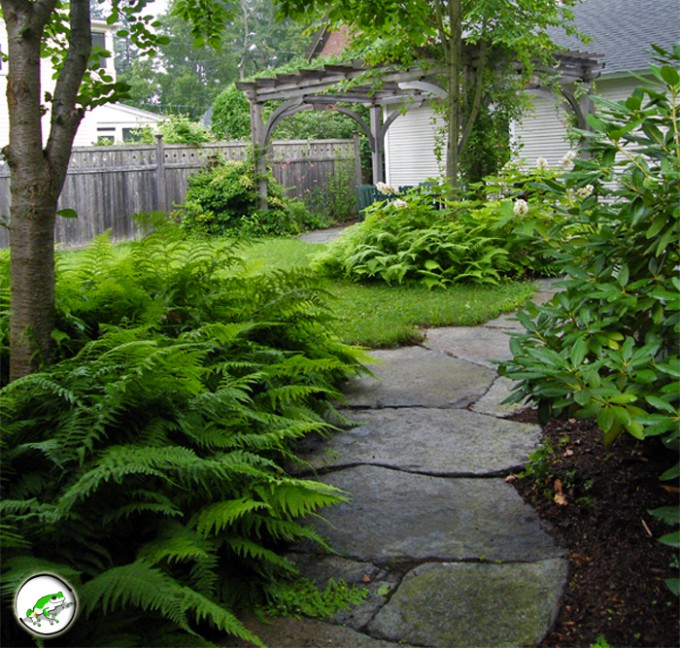 Ferns Mosses And Shade Garden Plants